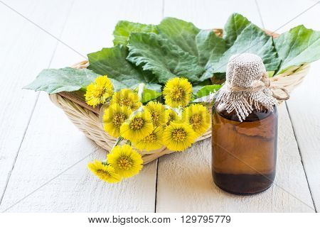 Medicinal plant - coltsfoot (Tussilago farfara). The infusion leaves and flowers in a basket. Selective focus