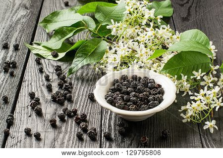Medicinal plant - bird cherry (Prunus padus). Flowering branches and dried berries on a white wooden background. Selective focus