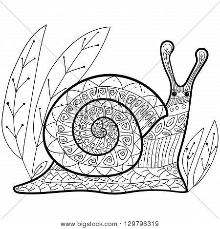 Cute snail adult coloring book page. Happy smiling snail in garden. Whimsical line art.