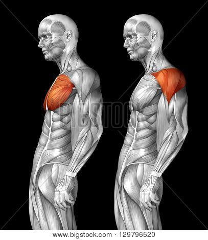 Concept or conceptual 3D chest human anatomy or anatomical and muscle set or collection isolated on black background