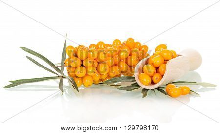Bunch of sea buckthorn berries in a wooden scoop isolated on white background.