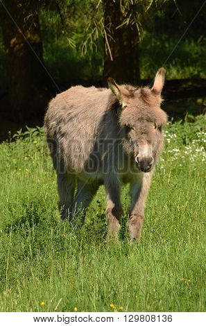 Donkey in green grass in spring time