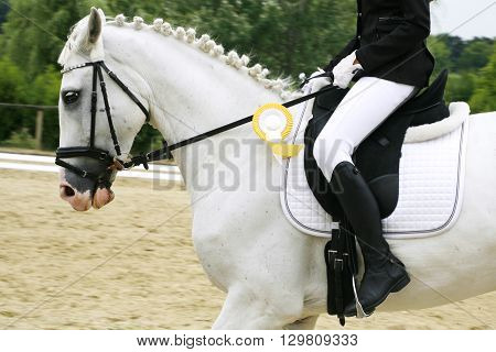 Grey colored dressage horse under saddle with unidintified rider
