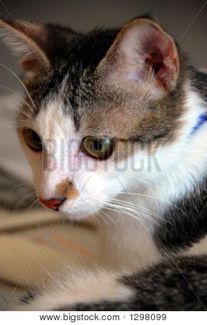 Cat_0961