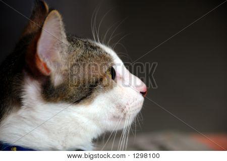 Cat_0964