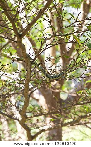 green snake lies on a branch of a tropical tree
