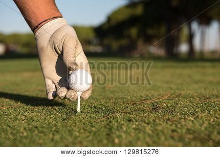 closeup of golf players hand placing ball on tee. beautiful sunrise on golf course landscape  in background