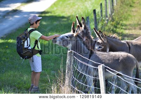 Young Boy Giving Food For Donkeys