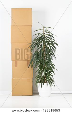 Plant with stack of moving carton boxes in front of white wall