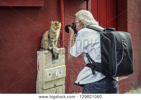 Istanbul Turkey - September 9, 2012: While modeling for photographers Photographers interested in the cat model study one of Istanbul Çukurcuma I saw a street cat across the street.