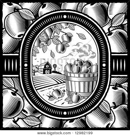 Apple harvest black and white