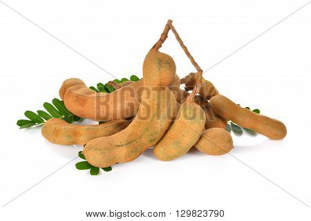 young tamarind with leaves on white background