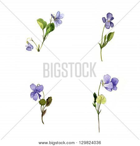 watercolor drawing wild blue  flowers, plants of violets, painted  wild herbs, botanical illustration in vintage style, hand drawn  illustration