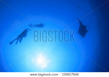 Scuba diving with manta ray