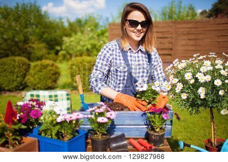 Cheerful young woman wearing gloves and sunglasses potting osteospermum flowers. Gardening concept.