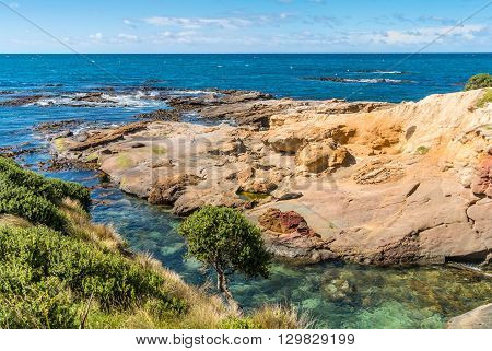 New Zealand colorful coastline landscape with fur seals at Otago Region Southern island New Zealand