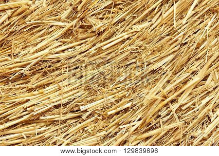 a nice of hay background golden autumn