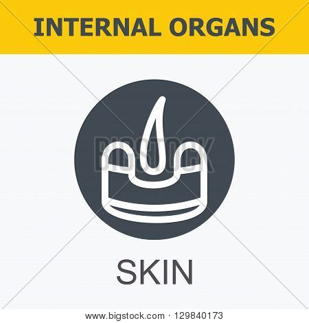 Internal organs - skin. Family and a healthy lifestyle. Medical infographic icons, human organs, body anatomy. Vector icons of internal human organs Flat design. Internal organs icons.