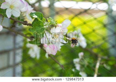 цветы, насекомые , шмель , зелень , природа