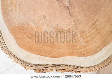 Close-up surface of wooden cut texture stock photo