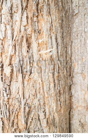Classic old wooden texture background stock photo