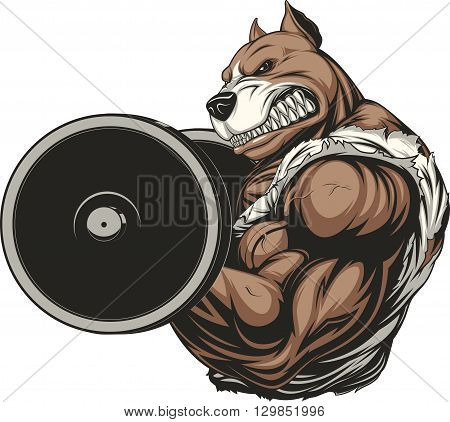 Vector illustration of a ferocious pitbull raises the barbell on biceps