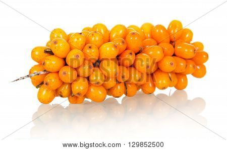 Branch of sea-buckthorn with ripe berries isolated on white background.
