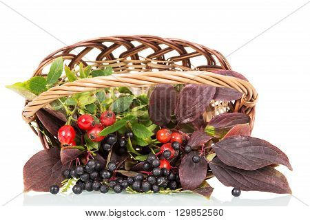 Basket with rose hips and berries elderberries isolated on white background.