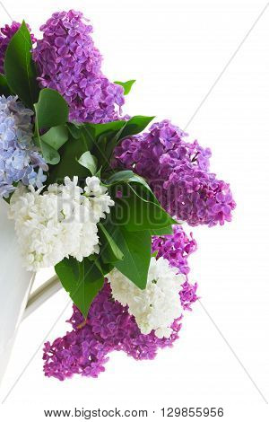 Posy of fresh lilac flowers  isolated on white background