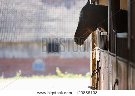 The horse peeking out of the stall
