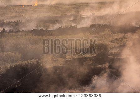 Burning Dry Grass On Field