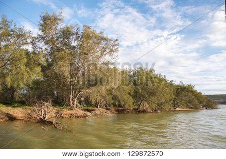 Vegetated riverbank of the Murchison River under blue cloudy skies in Kalbarri, Western Australia.