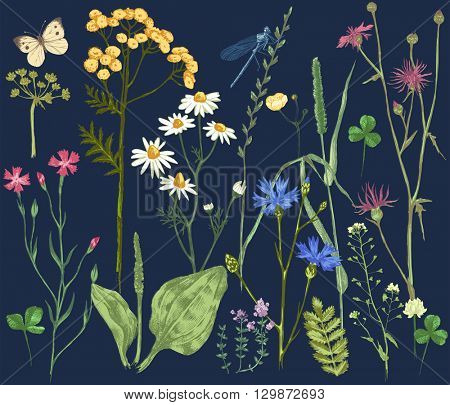 Hand drawn set with colorful herbs and flowers on dark background