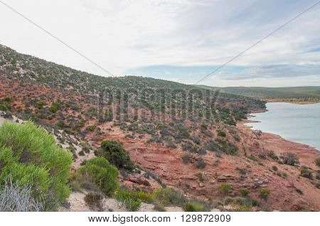 Elevated views over the Murchison River river bank with native flora and red sandstone on coastal dunes under a blue sky with clouds at dusk in Kalbarri, Western Australia.