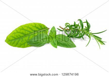 herb basi rosemary and laurel on white background