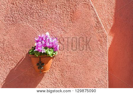 Pink Flowers On The Red Wall Of A House