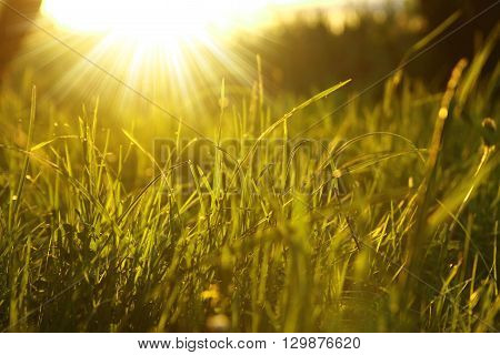 a nice green grass background with sun