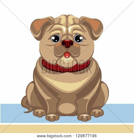 vector illustration of a pug dog in red collar with no background