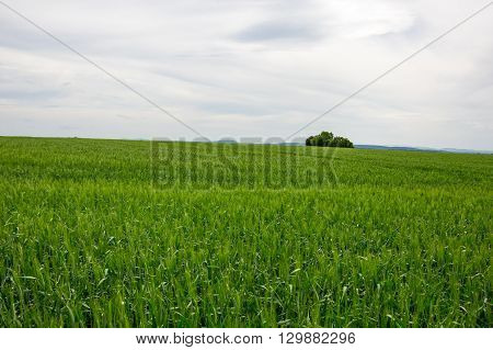 View on endless fields of the French Provence