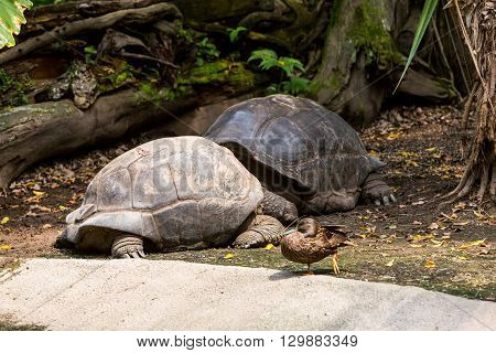 View Of Two Turtles In A Zoo