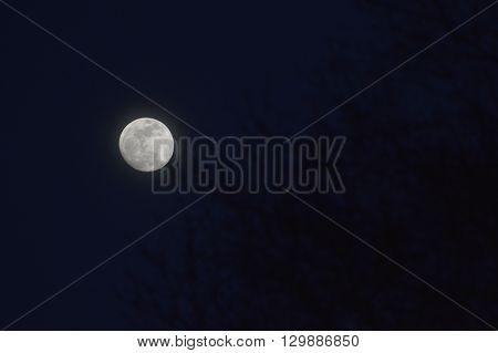 Noche oscura con la luna llena entre los arboles