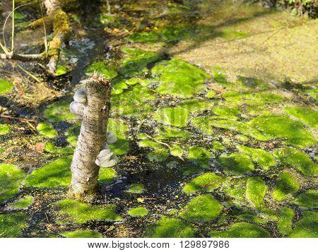 Pond With Moss And Mushroom