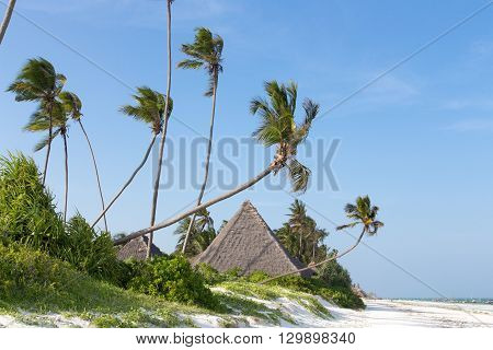 white beach of Zanzibar island with palm trees and bungalows sky and ocean