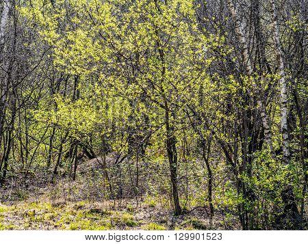 Green Leaves In Sunlight