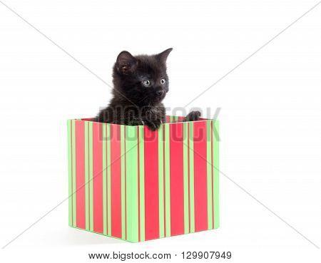 Cute Black Kitten In Box