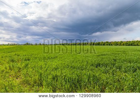 green fresh grassland and clouds in the background