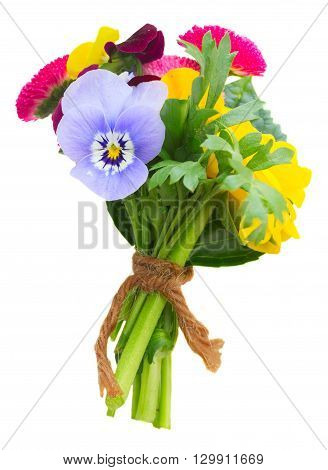 Posy of fresh  pansies, daisies and ranunculus isolated on white background