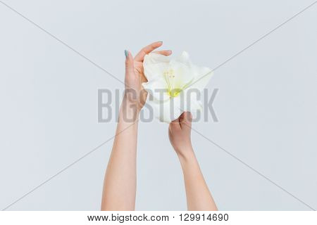 Female hands holding lily isolated on a white background