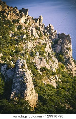 sharp cliff with trees in the evening filter