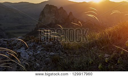 Wind rustles feather grass at sunset. Spring landscape
